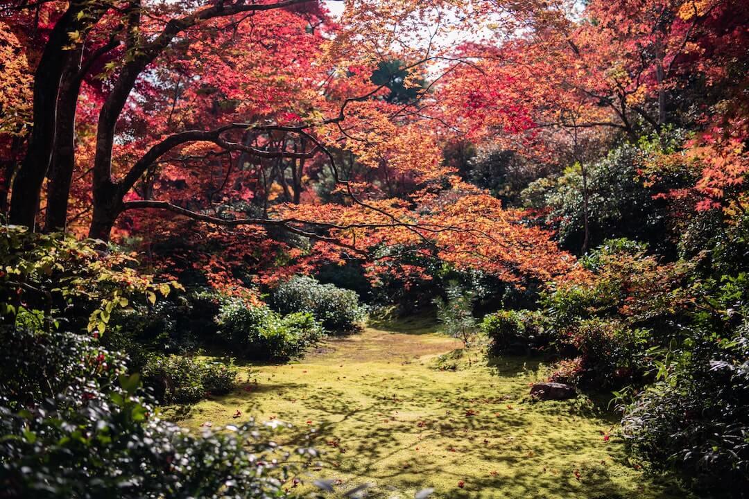 Trees Japan Reiki